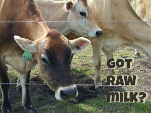 raw milk farm near Allen, Frisco, McKinney, Plano TX