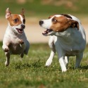 Dog parks and pet ordinances in Collin County