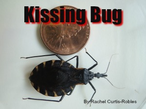 Kissing Bug in Texas