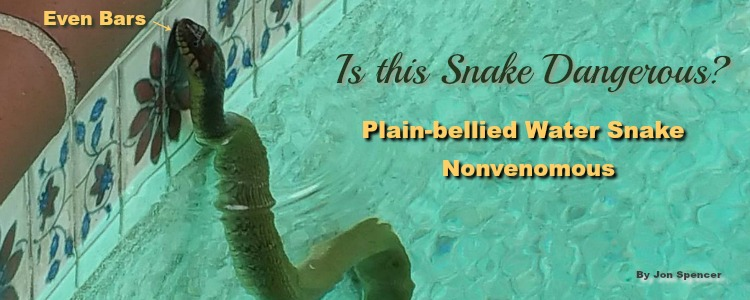 snake in swimming pool, Dallas TX